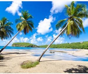 Oui-Caribbean-Grenada-newsamericasnow