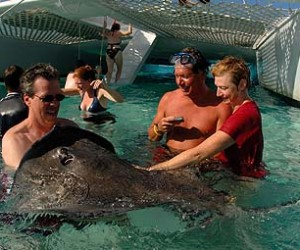 stingray-city-Cayman Islands-newsamericasnow