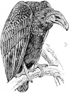vultures_obama_care