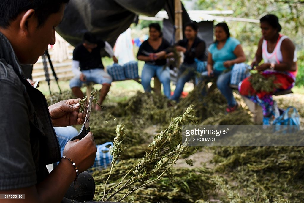 marijuana an illicit drug in america Marijuana is the most widely used illicit drug in the us contrary to  o in 2015,  222 million americans aged 12 or older were current marijuana users of.