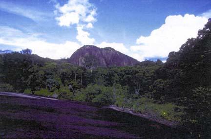 suriname-central-reserve-world-heritage-site