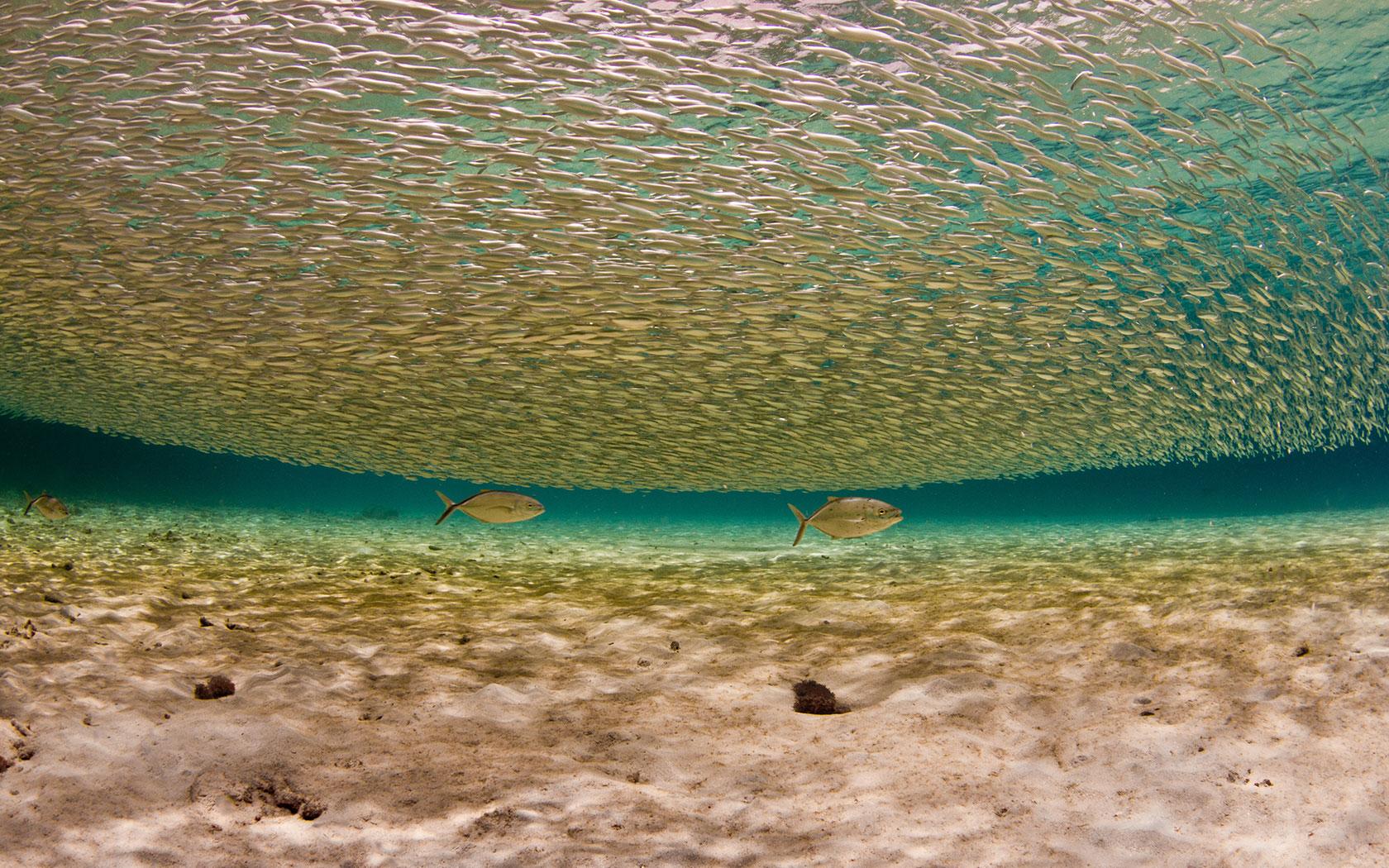 shoal-of-fish-bonaire