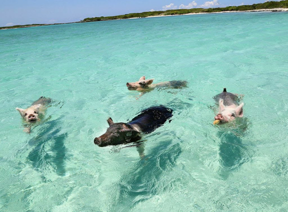 exuma_bahamas_best_caribbean_island_2017