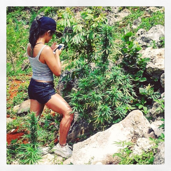jamaica--weed-tours