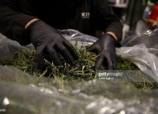 california-weed