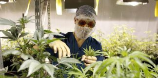 Puerto_Rico_Medical_Marijuana