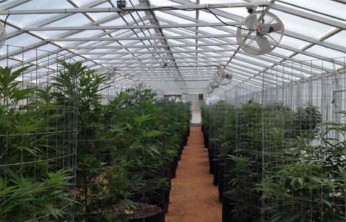 kaya-farms-jamaica