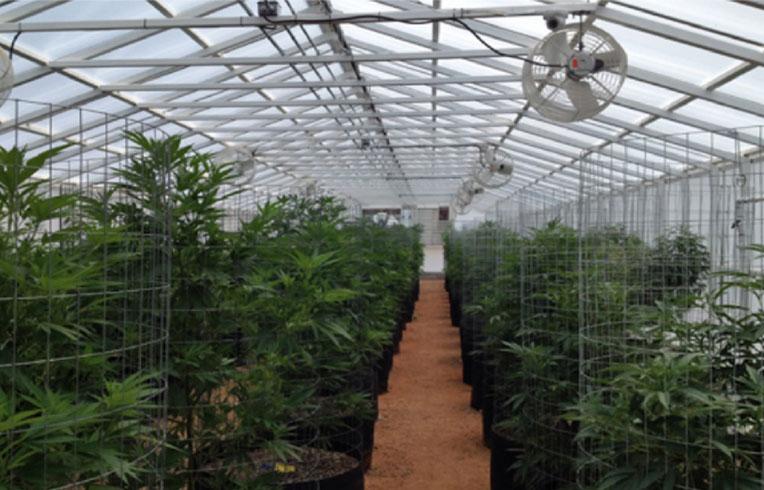 Marijuana News Jamaica Gets First Legal Ganja Retailer