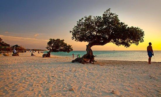 palm-eagle-beach-aruba