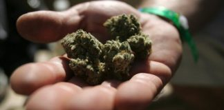 cannabis-consortium--inc-edibles