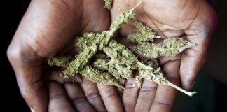 jamaica-bud