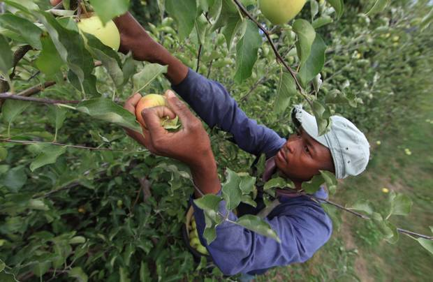 Caribbean-H-2A-agricultural-workers