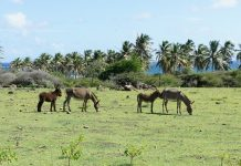 caribbean-travel-photo-of-the-day-nevis