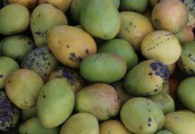 caribbean-travel-st-mary-mangoes