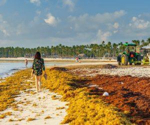 Sargassum-in-the-Dominican-RepubliC