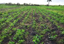 CROP-FARMING-IN-GUYANA