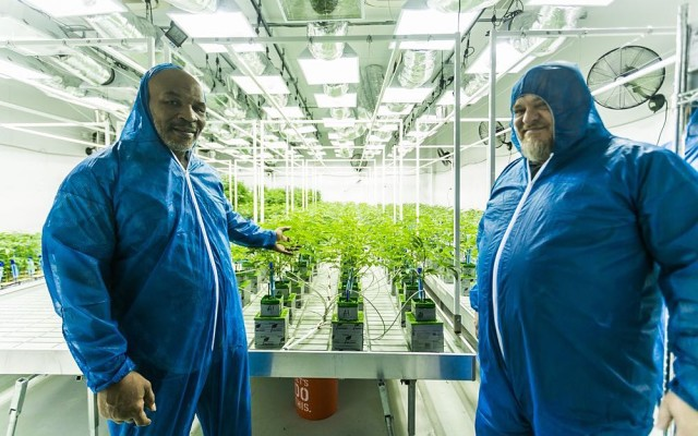 Mike-Tyson-growing-cannabis-ranch