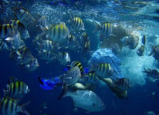 caribbean-travel-photo-of-the-day-diving