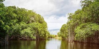 jamaica-black-river