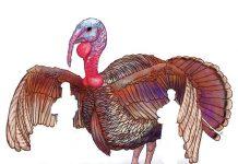turkeys-running-wild-in-trumps-america
