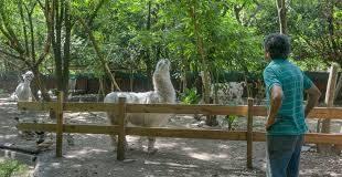 Animal-Paradise-Argentina