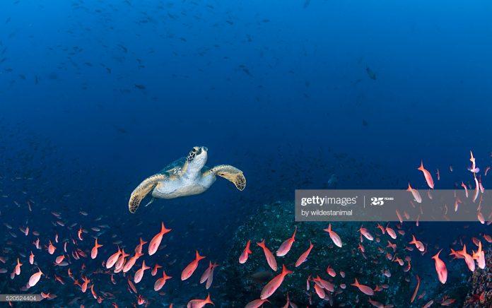 The-Galapagos-Ecuador
