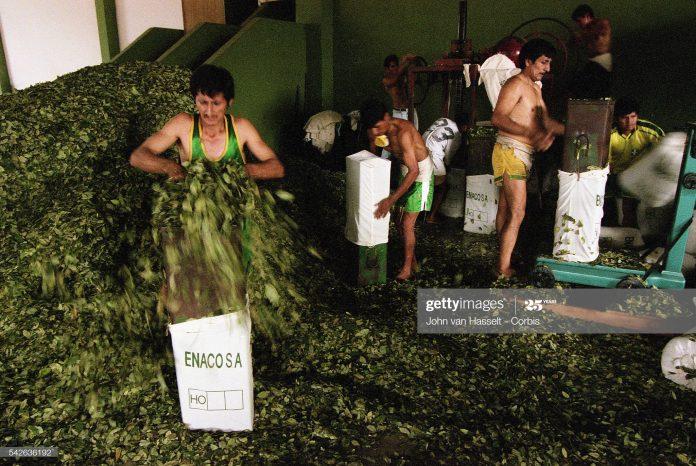 peru-coca-leaves