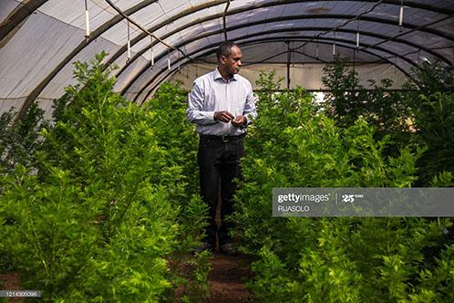 marijuana-grow-BIONEXX