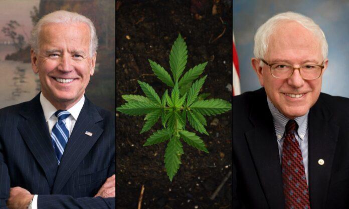biden-sanders-marijuana
