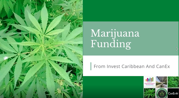 marijuana-funding-from-icnc