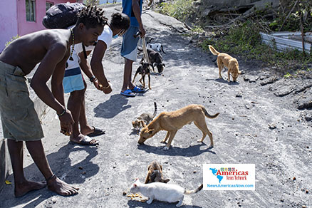 owia-residents-feed-hungry-animals-in-st-vincent