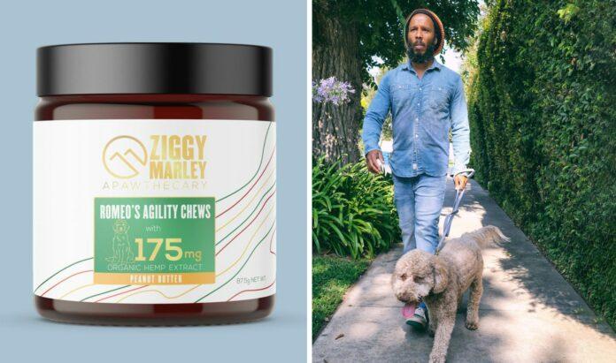 Ziggy-Marley-gets-into-cbd