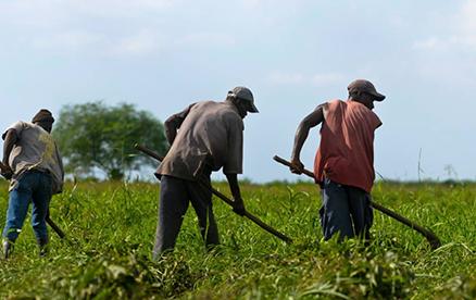 haitian-farmers
