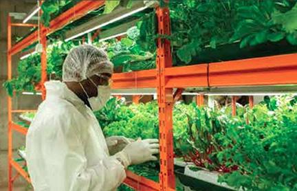 building-caribbean-food-security